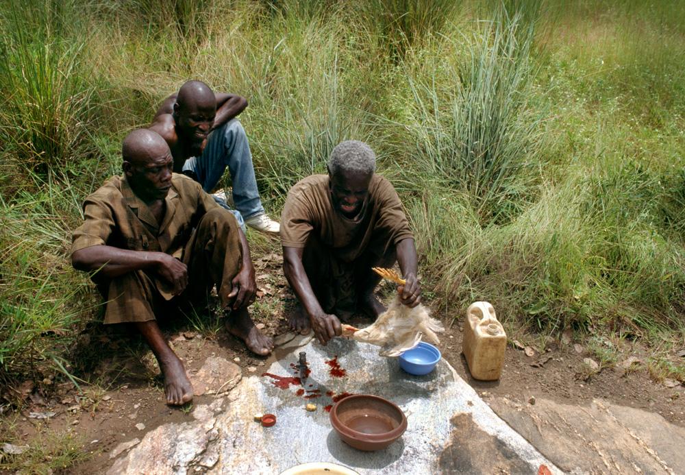 Sacrifice pour honorer les mânes des ancêtres disparus, chez les Mona. Le chef de famille, Tato Karamoko, immole une poule blanche au pied d'un inselberg, à l'écart du village de Bambalouma. Photo Alain-Michel Boyer, 1999.