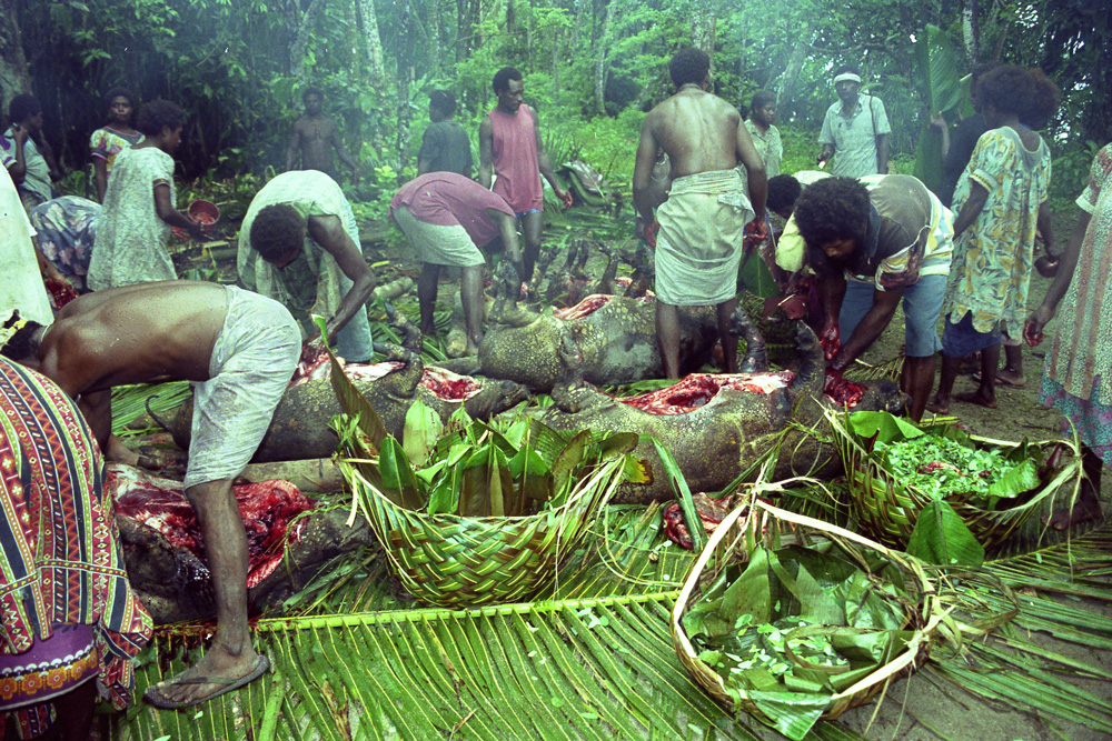 Préparation des porcs avant leur cuisson dans les fours en terre. Matankiang, village de Natong. Photo Antje S. Denner, 2001.