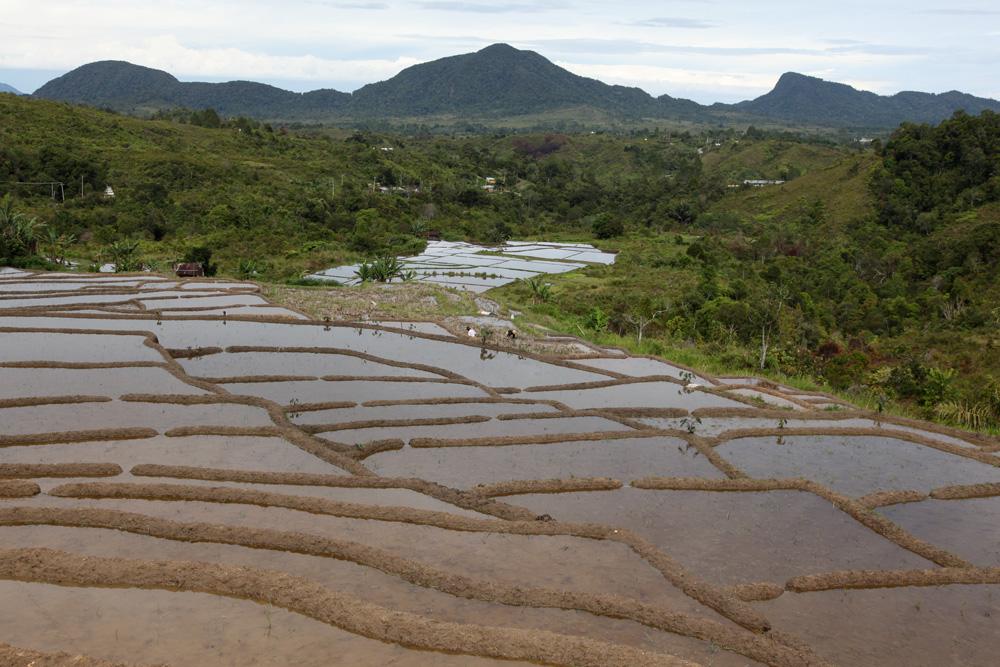 Rizières inondées en pays Kalasan. La déforestation par l'homme est évidente. Photo Helder Da Silva, 2011, abm-archives barbier-mueller.