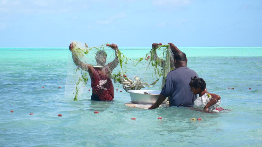 Sortie des poissons. Photo Guigone Camus, 2011.