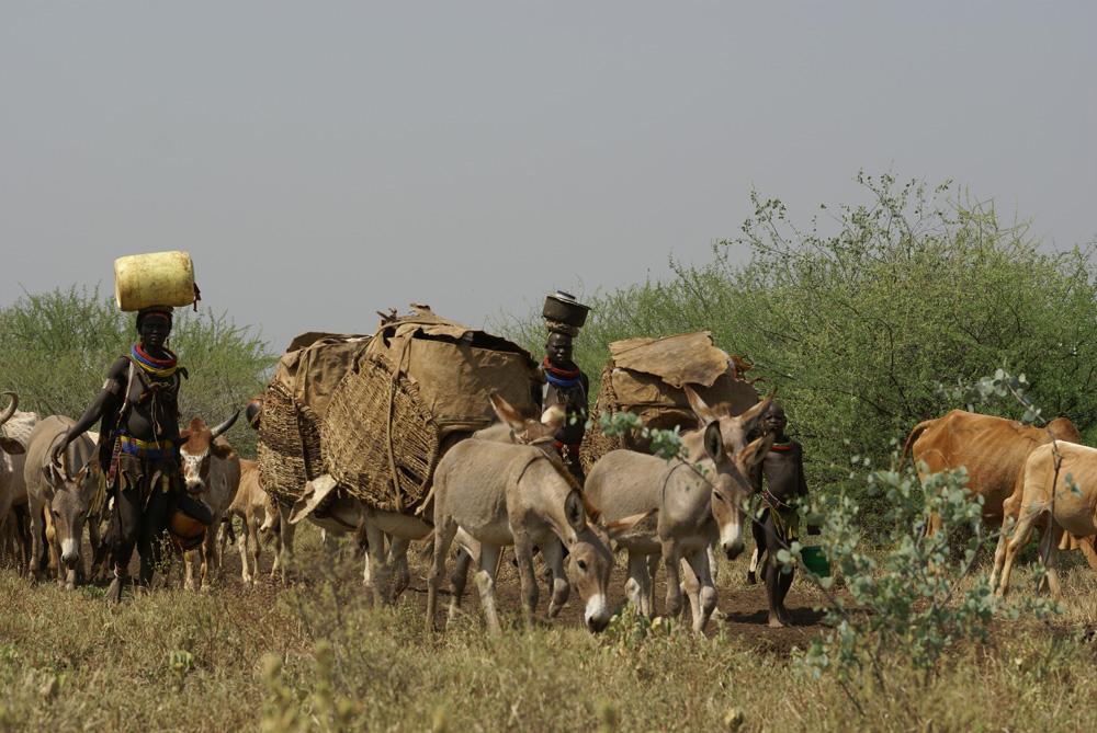 Migration d'une famille toposa (NgiKor) vers la région plus fertile des monts Moruankipi. Photo Gustaaf Verswijver.